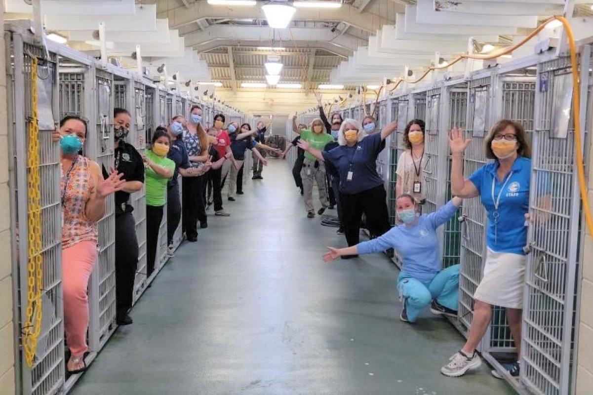 coronavirus boom adozioni cani