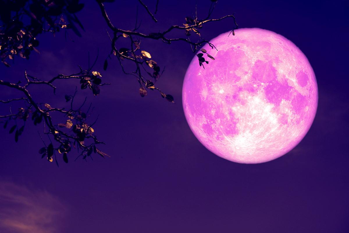eclissi luna rosa