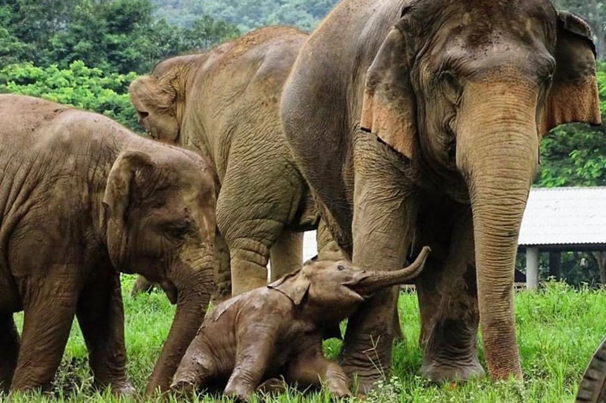 elefanti liberi