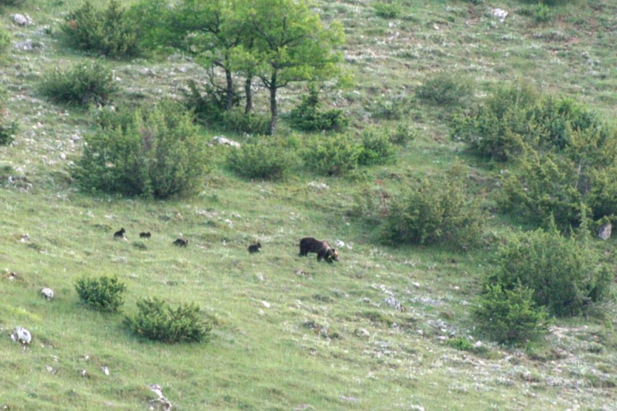 mamma orsa abruzzo