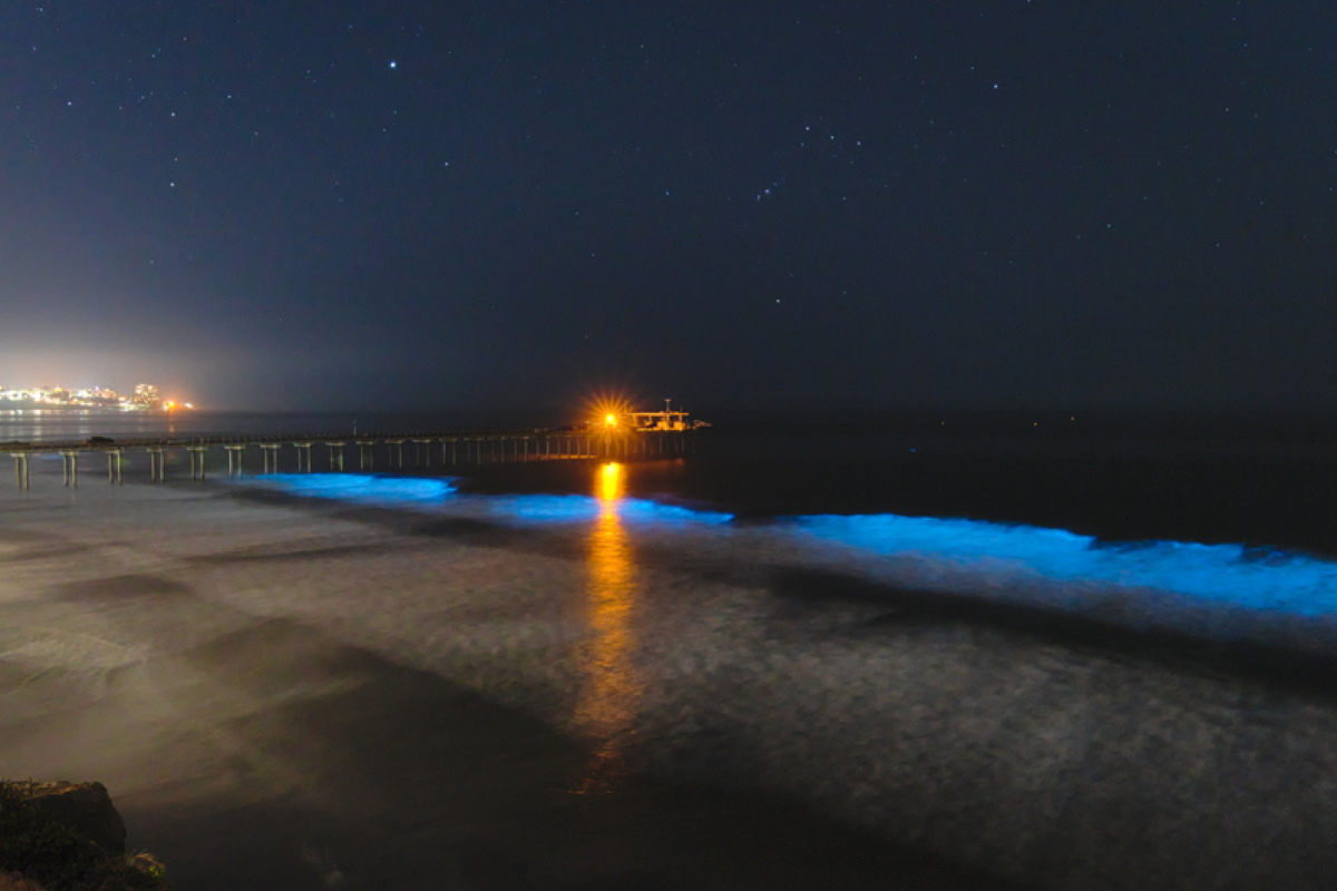 bioluminescenza mare blu california