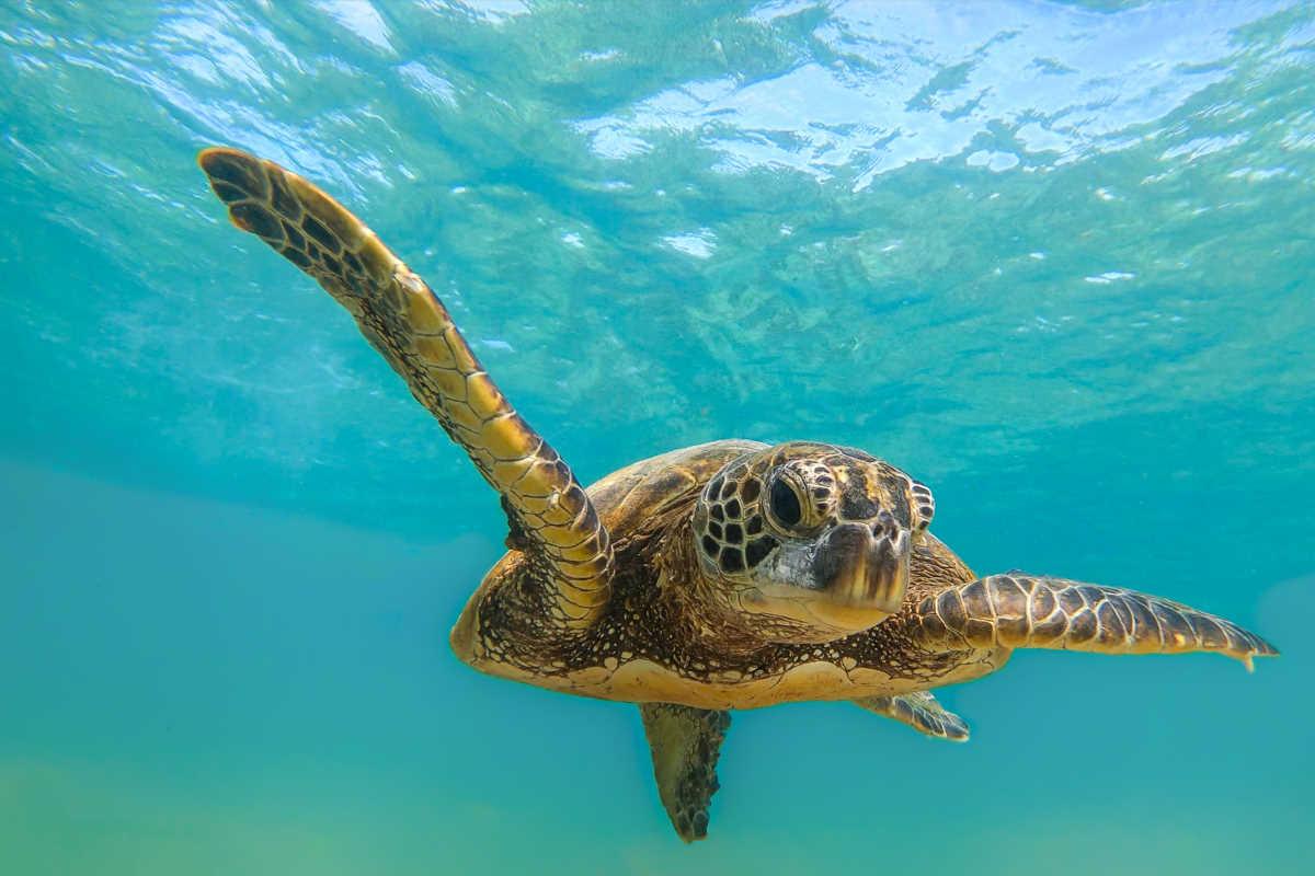 tartarughe giornata