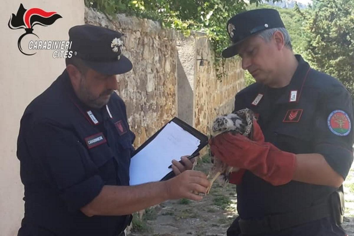 Carabinieri CITES Bracconaggio