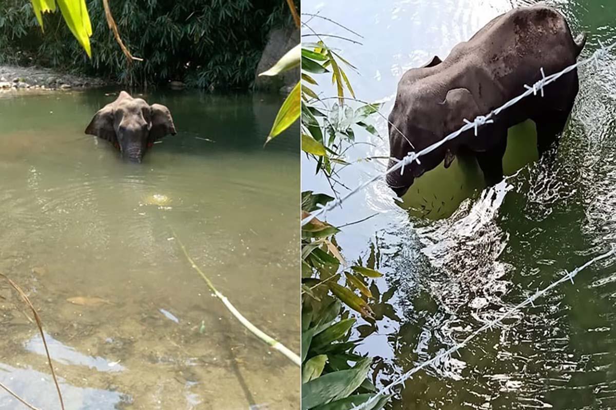 elefantessa-incinta-uccisa