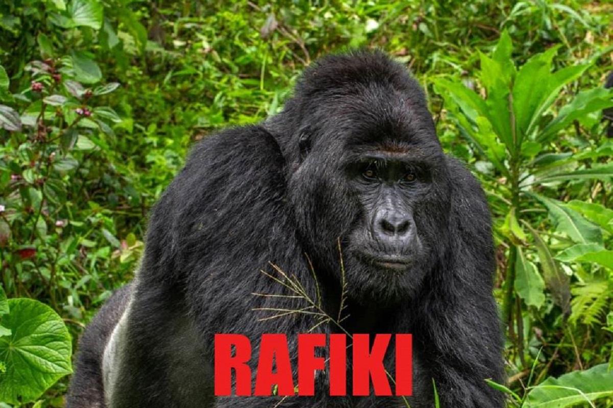 ucciso gorilla