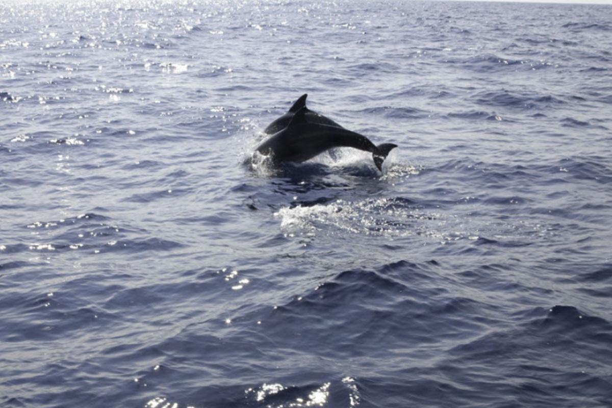 delfini suoni silenzio lockdown