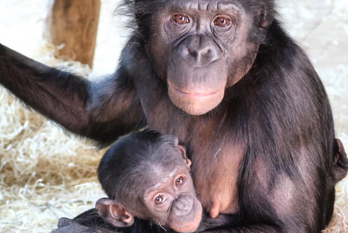 zoo scimmie