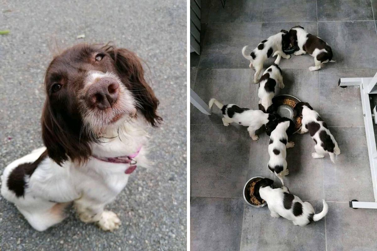 cagnolini rubati