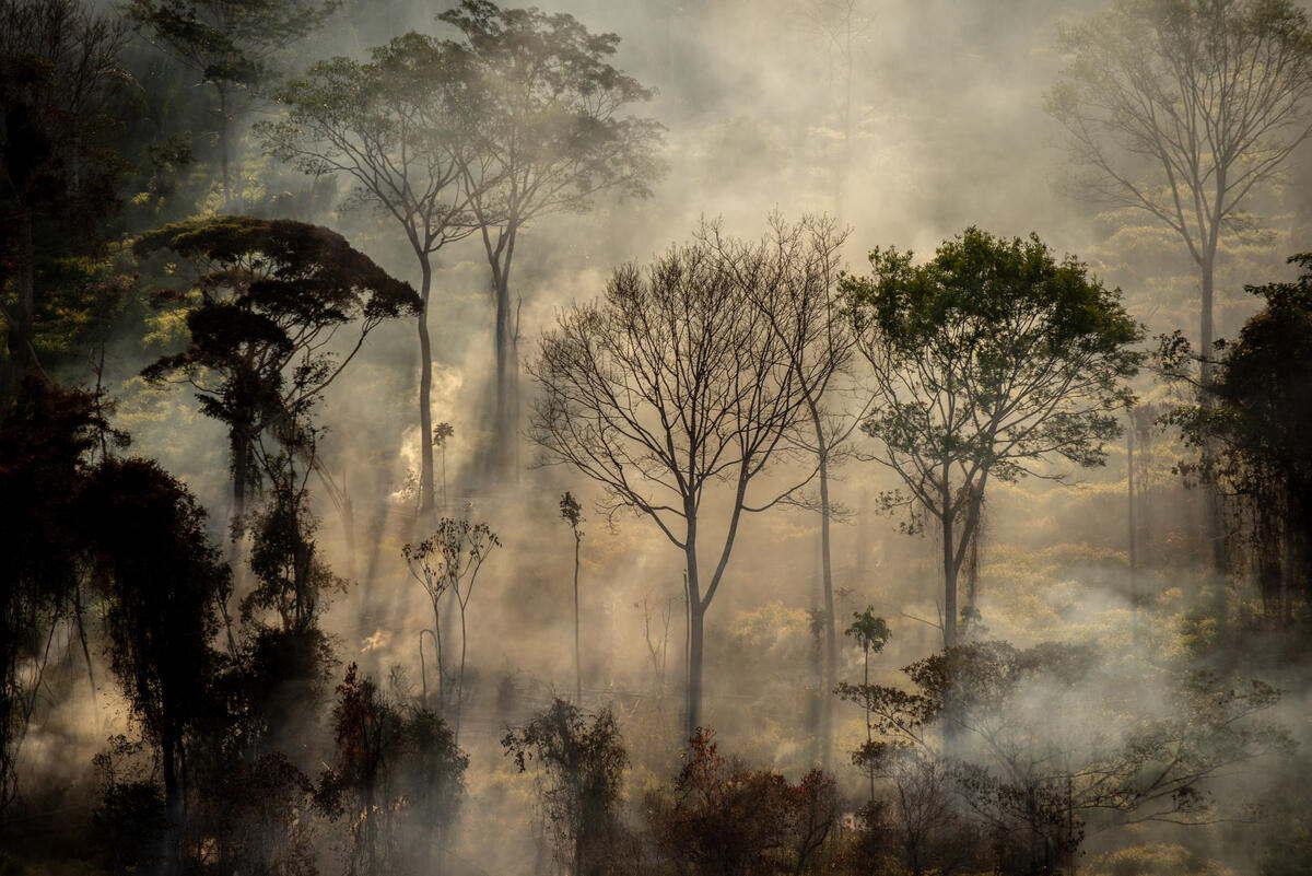 amazzonia brasile