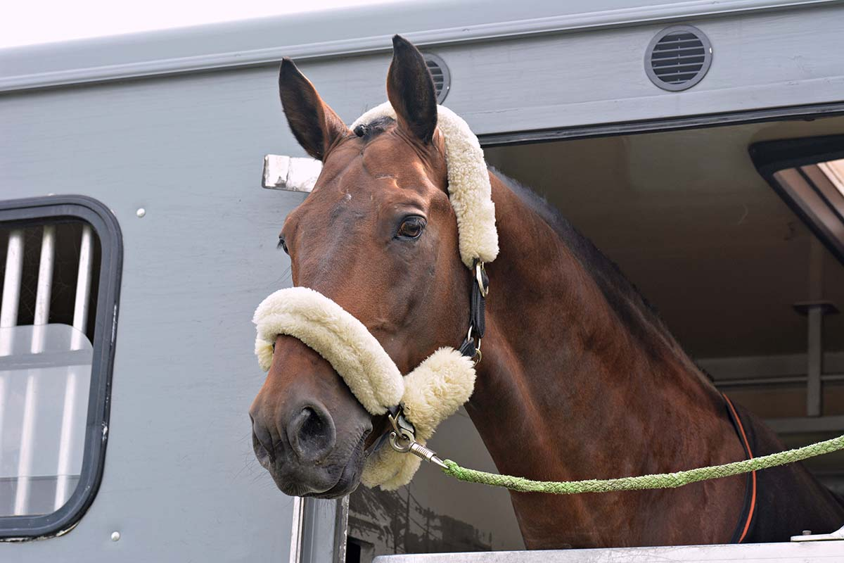 cavallo corsa trasporto