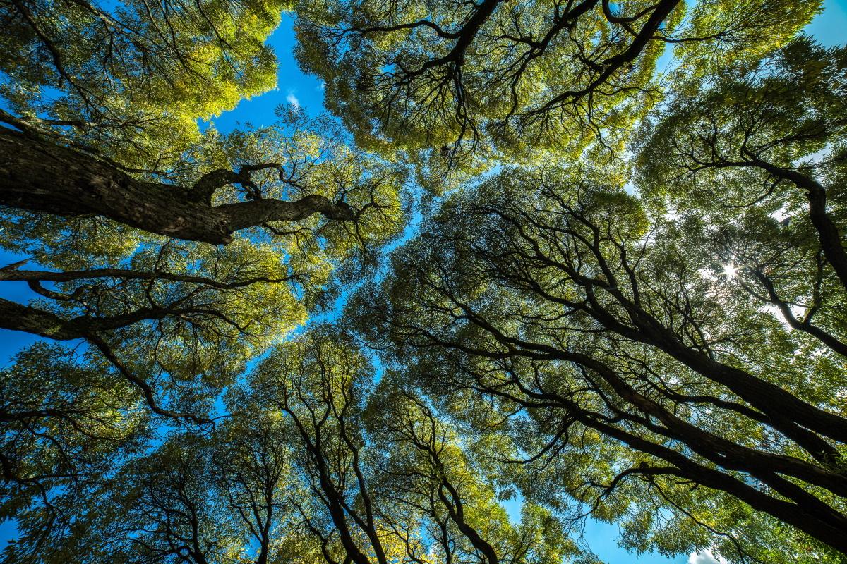 Distanziamento alberi