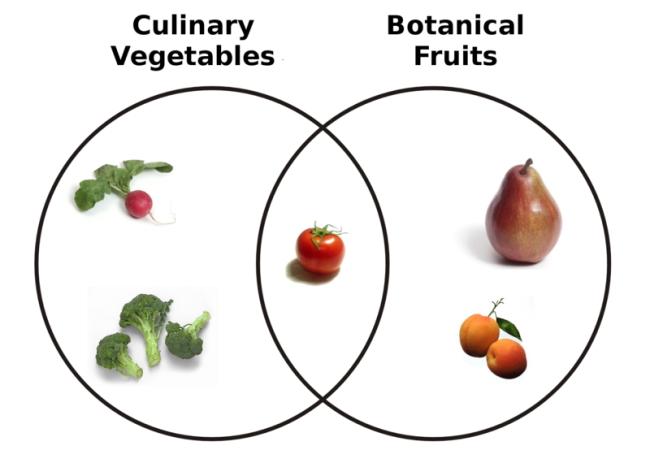 pomodoro sia frutto che vegetale