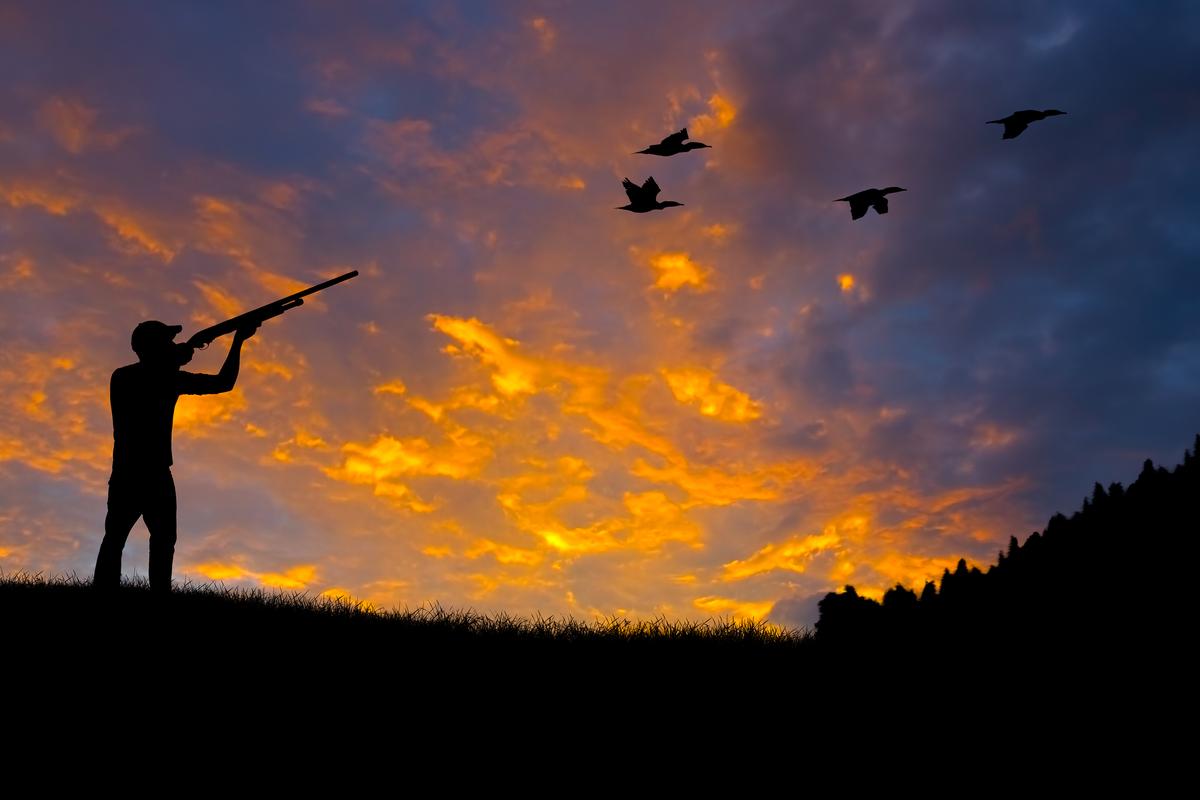 caccia marche