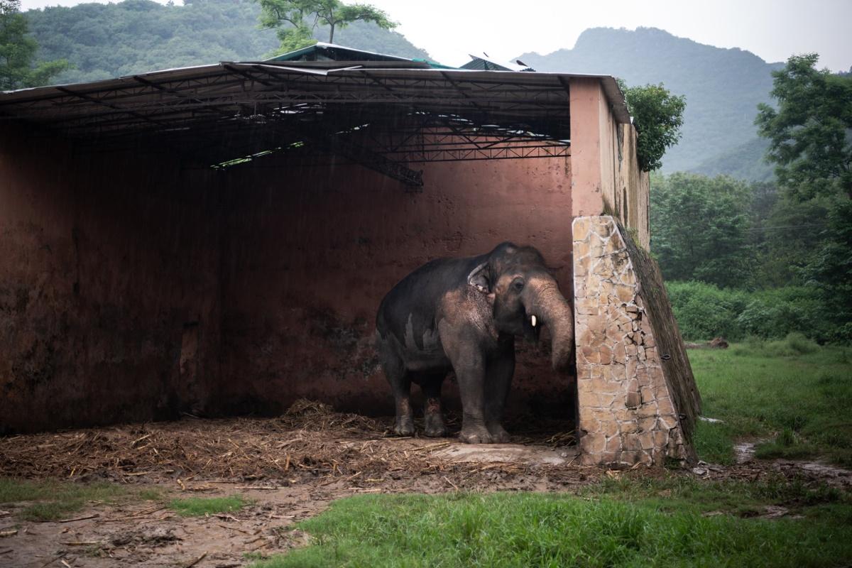 elefante zoo