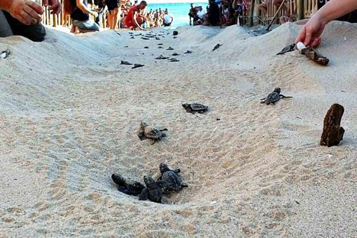 tartarughe porto cesareo