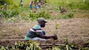 Haiti schar pianta alberi