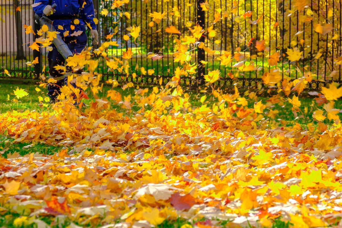 aspiratore foglie