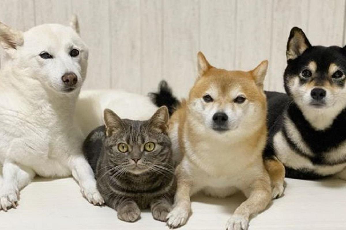 gatto e cani
