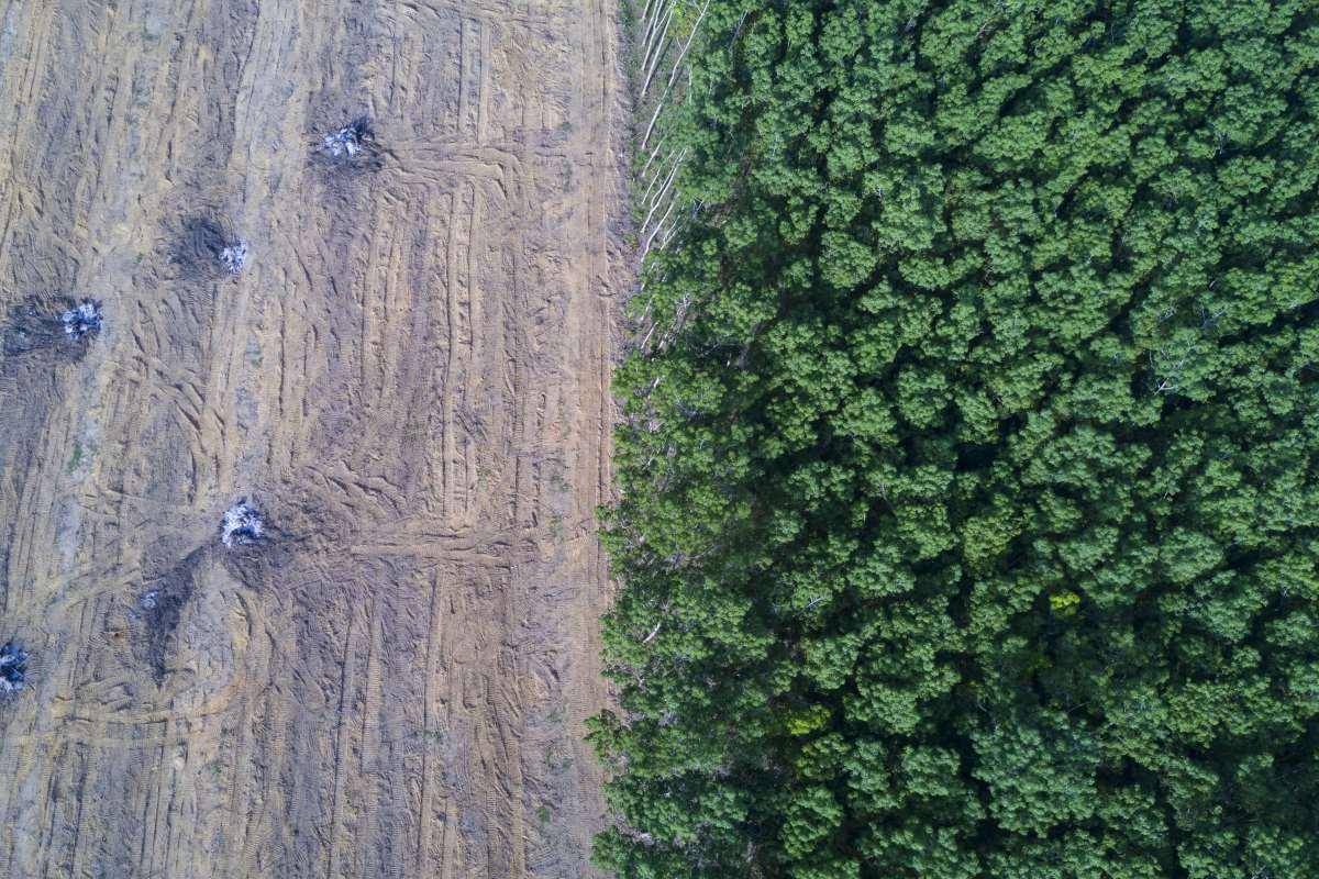 deforestazione abitudini consumo
