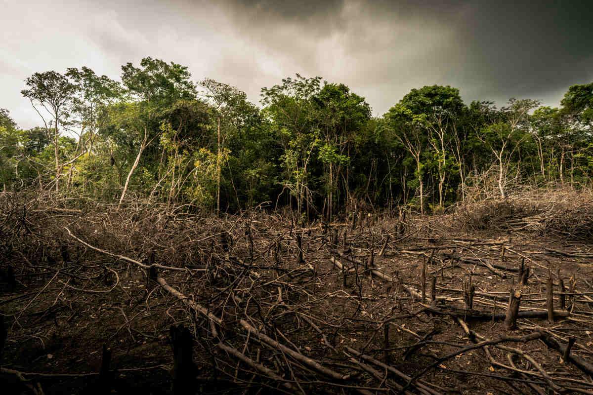 deforestazione wwf