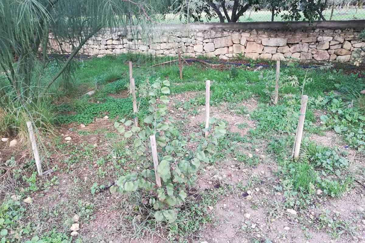 alberi malta