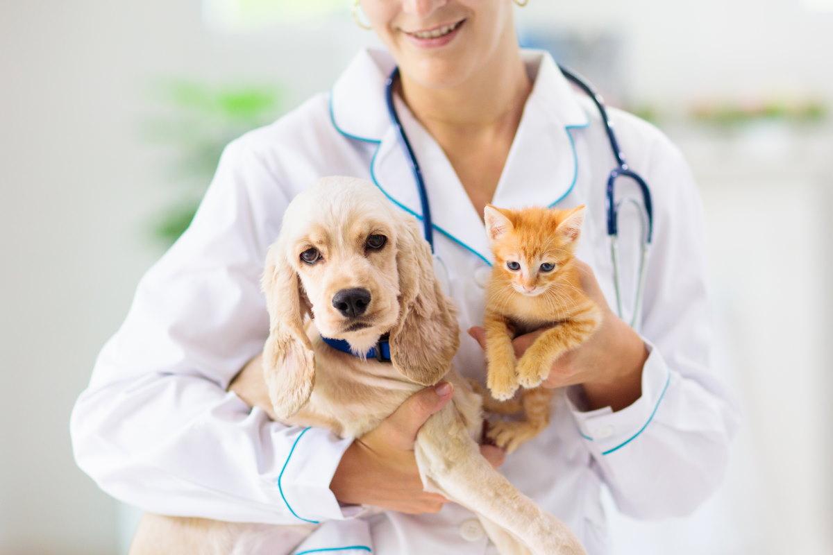 cure-cani-gatti