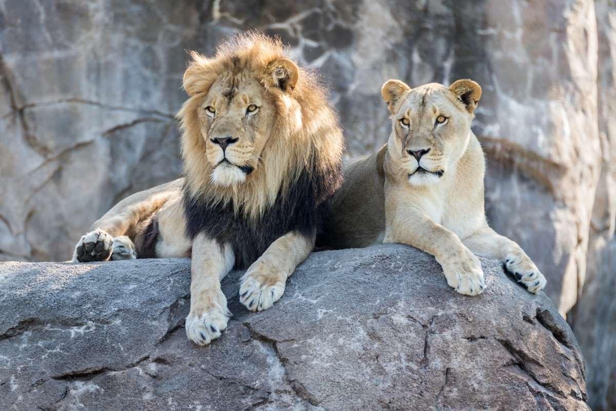 leoni zoo