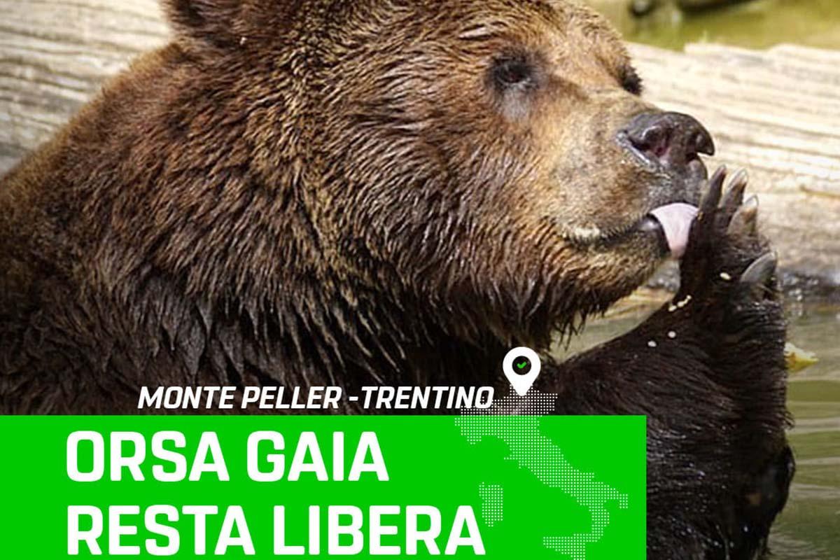 orsa gaia
