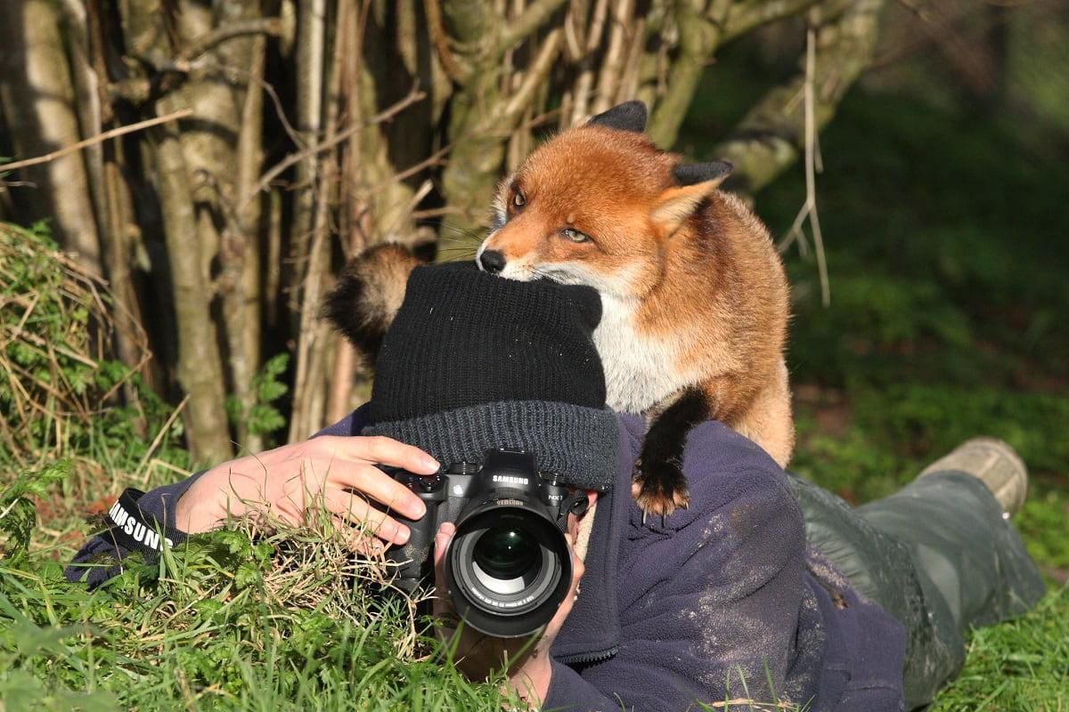 animali foto