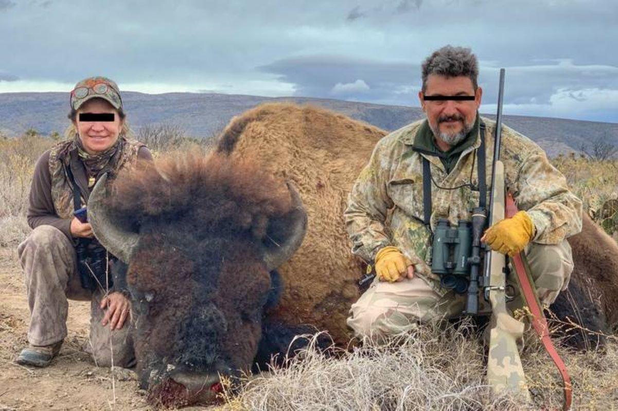 bisonte messico