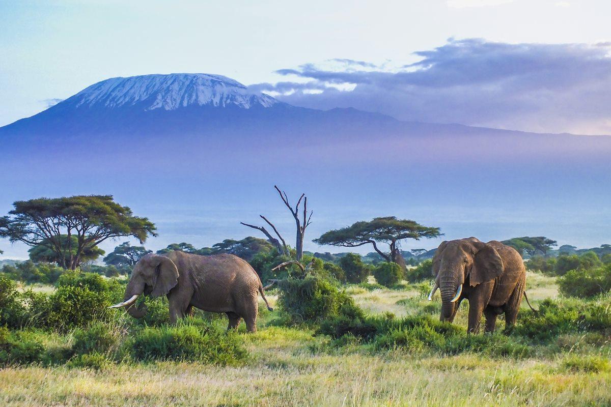 elefanti satelliti