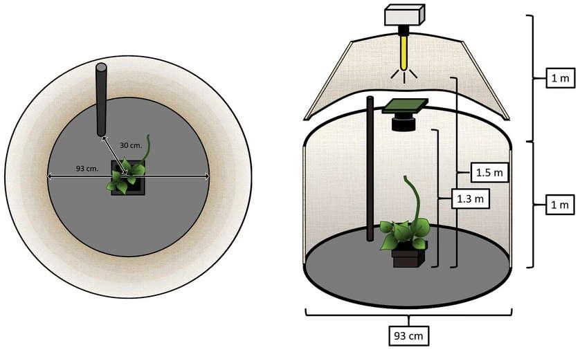 piante esseri senzienti