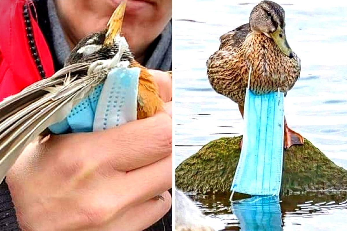 Mascherine: perché dovresti tagliare l'elastico prima di buttarle nel secchio dei rifiuti - greenMe