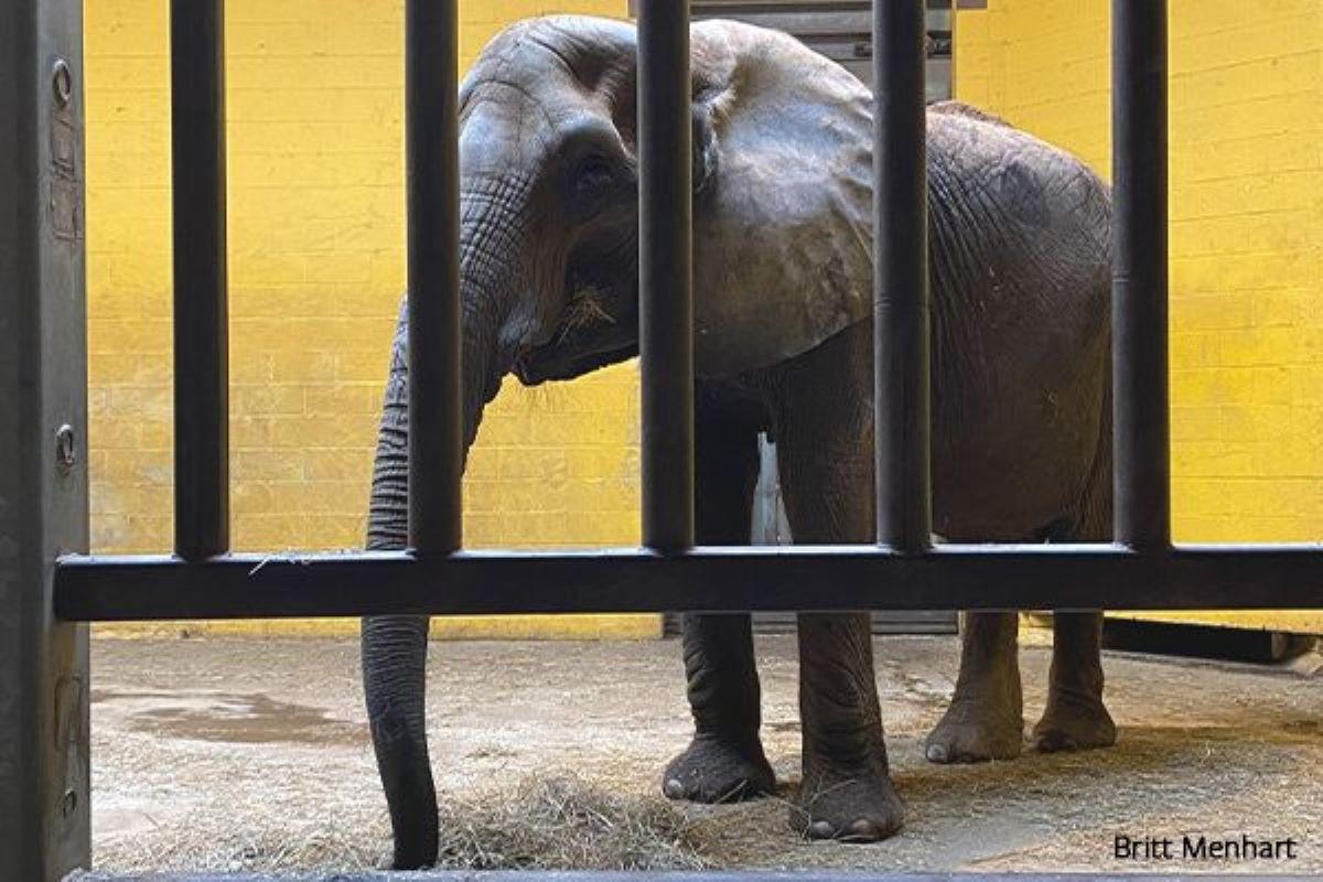 zoo elefanti usa