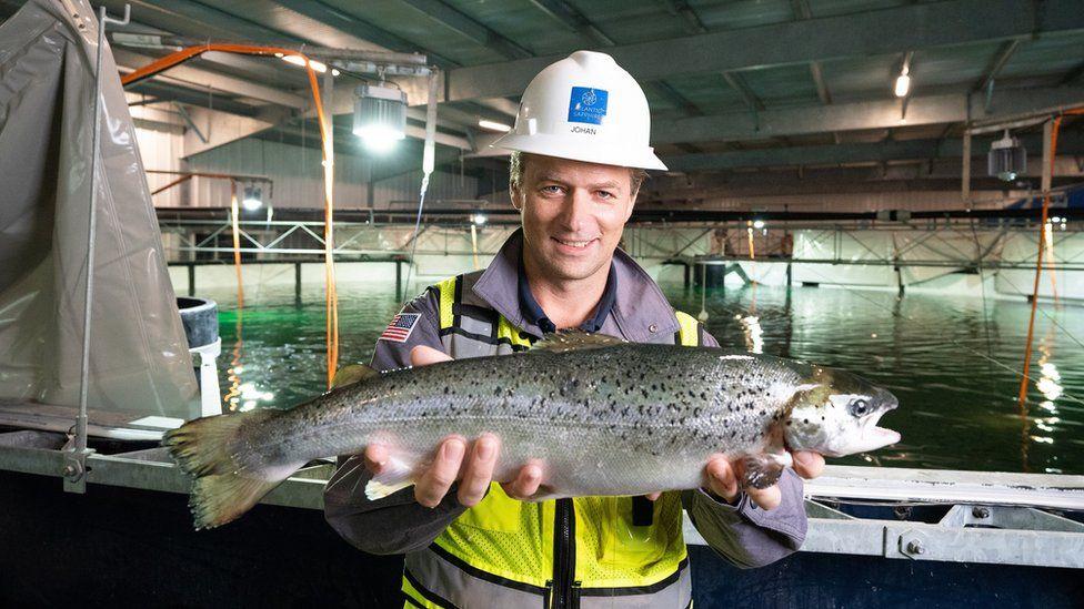 allevamento salmoni Atlantic Sapphire