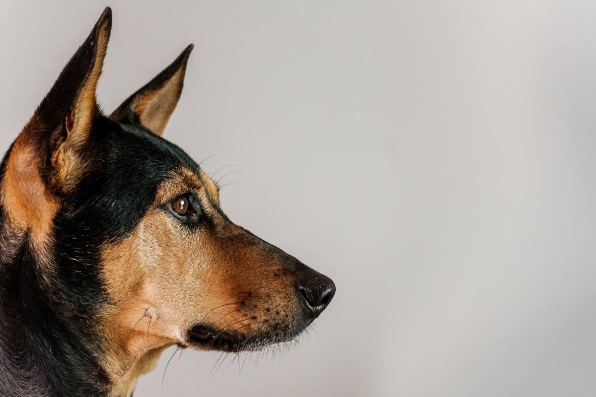 cane annusa