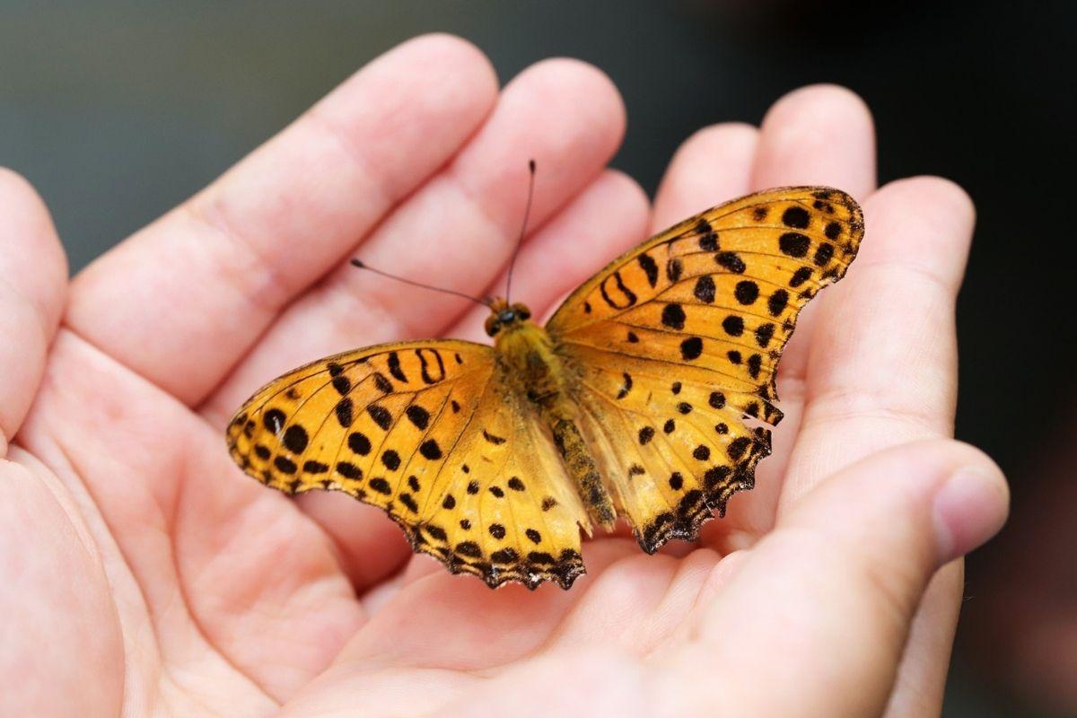 censimento farfalle