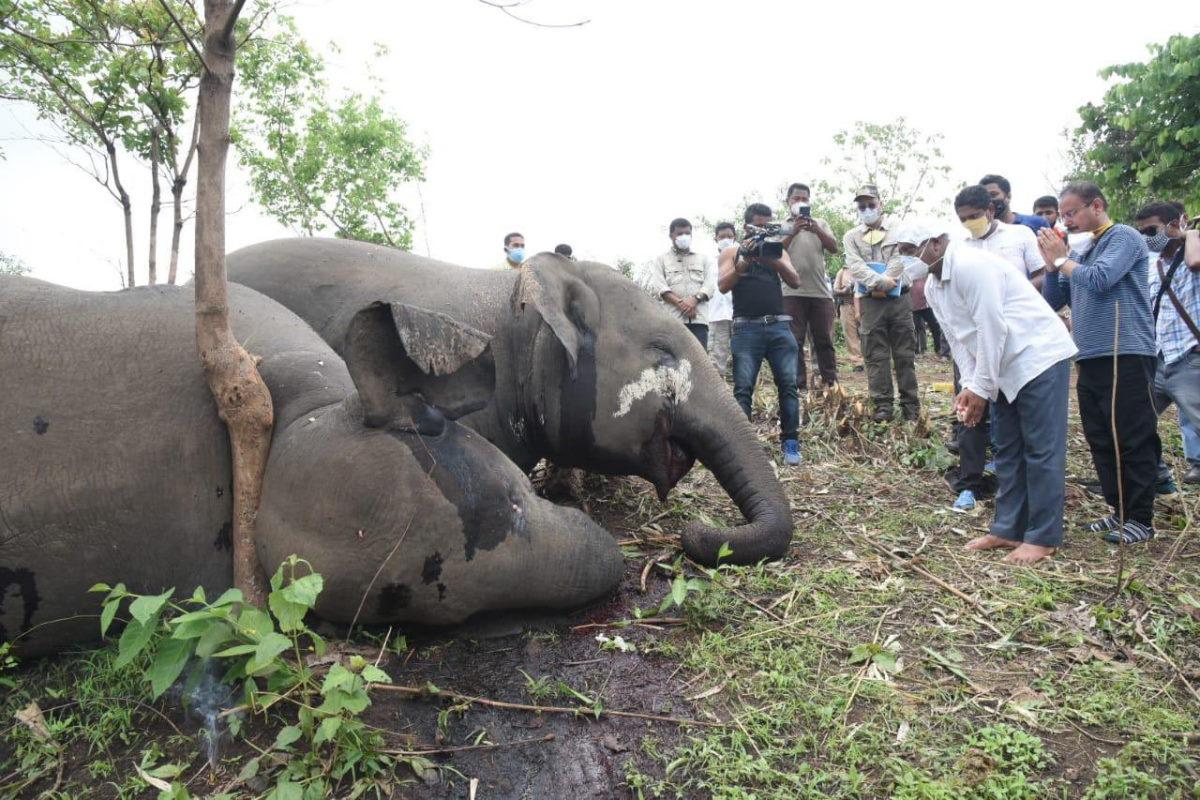 elefanti morti india