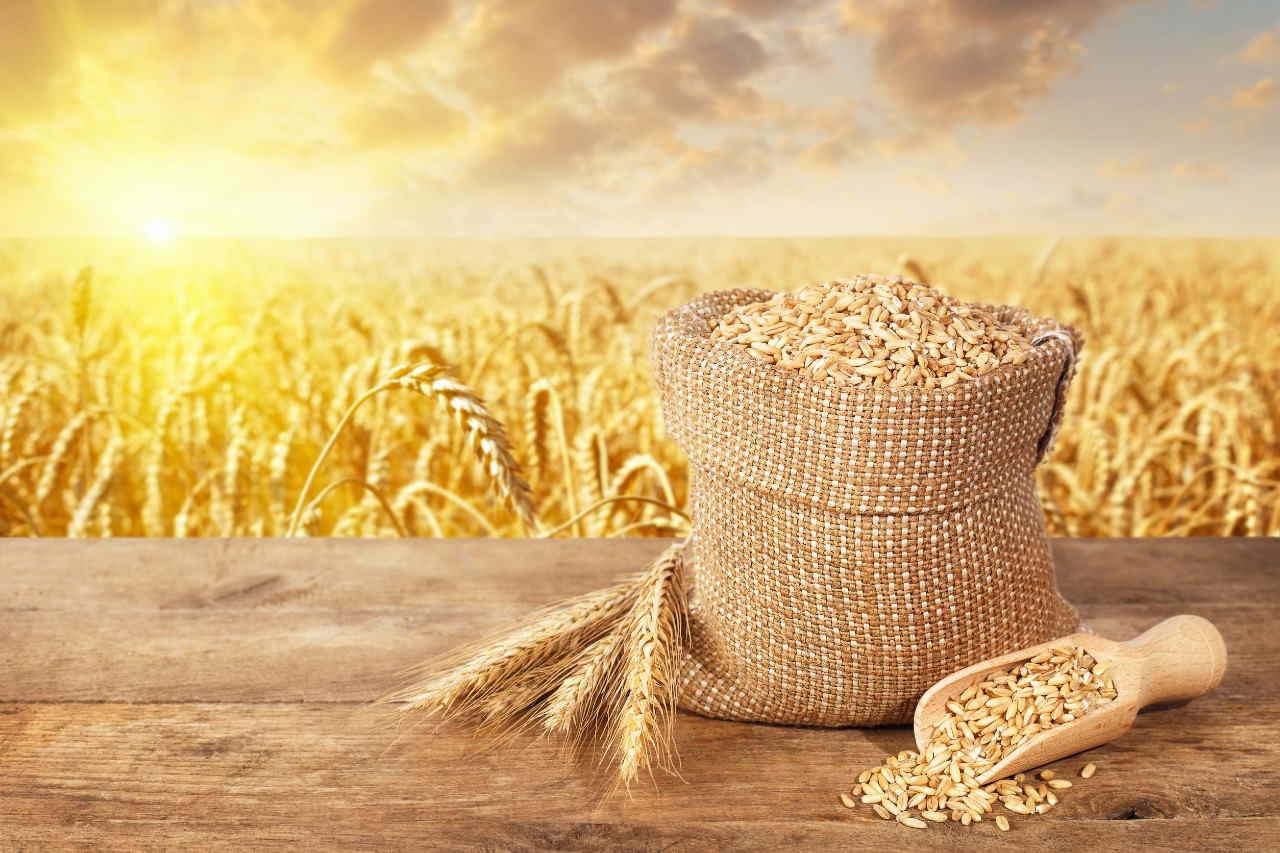 grano creso irradiato