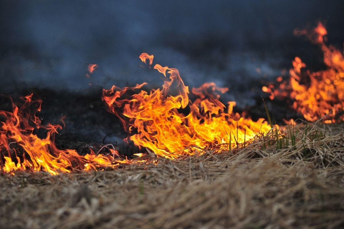 incendi boreali