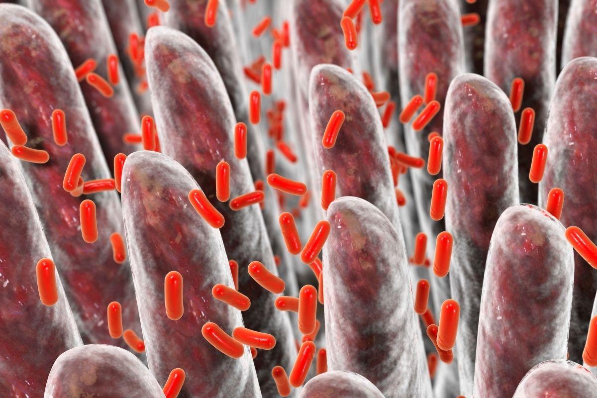 microbi intestino