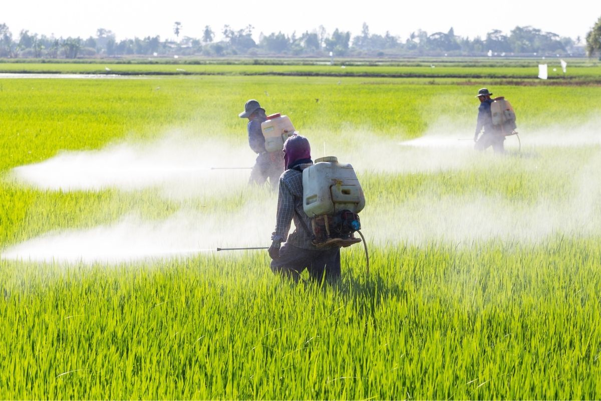 pesticidi chimici