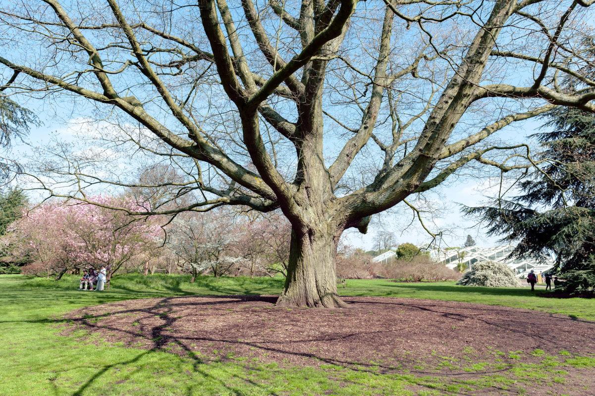 quercia richmond park