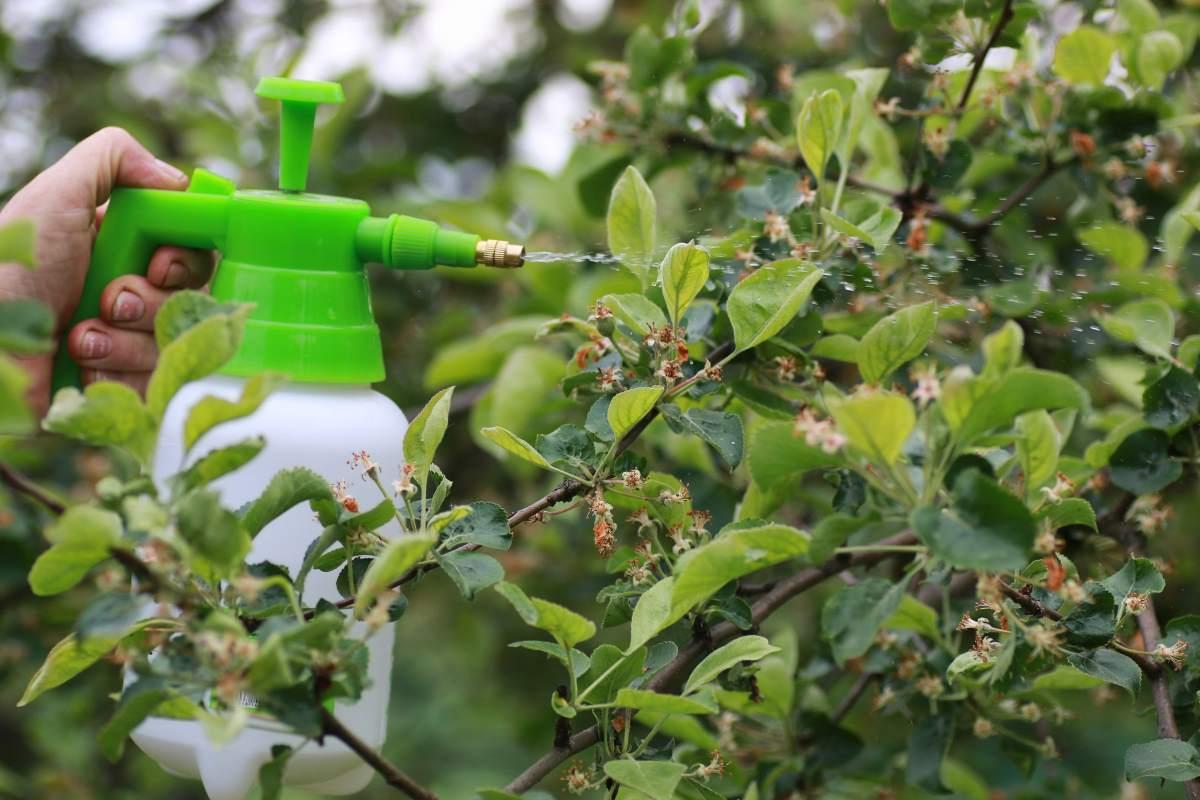spray fungicida
