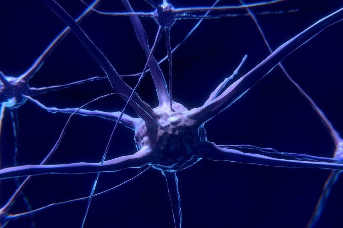 bisfenolo a danni al cervello