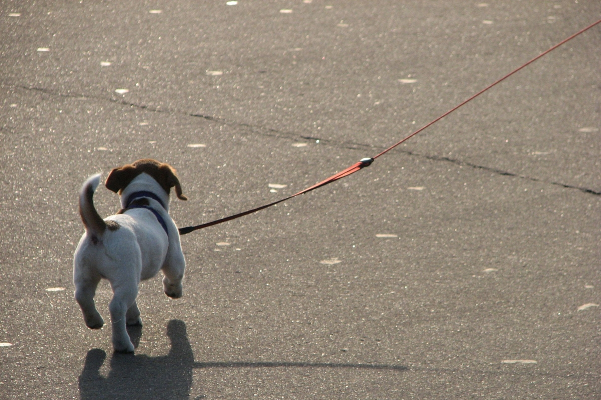 cane passeggio strada