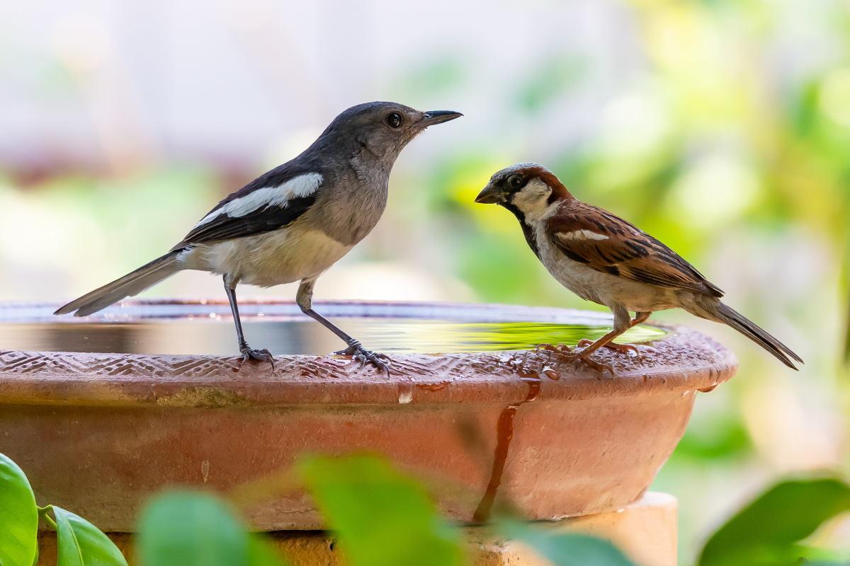 ciotola acqua uccelli