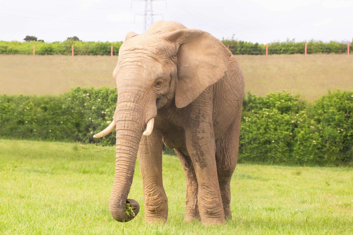 elefante morto noah ark zoo