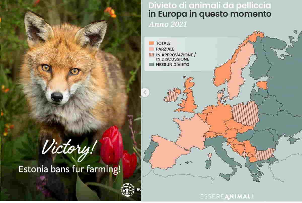 divieto pellicce estonia