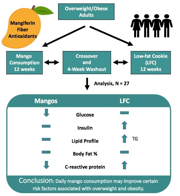 mango studio infografica